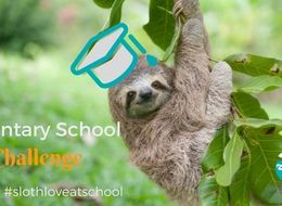 October is International Sloth Month!