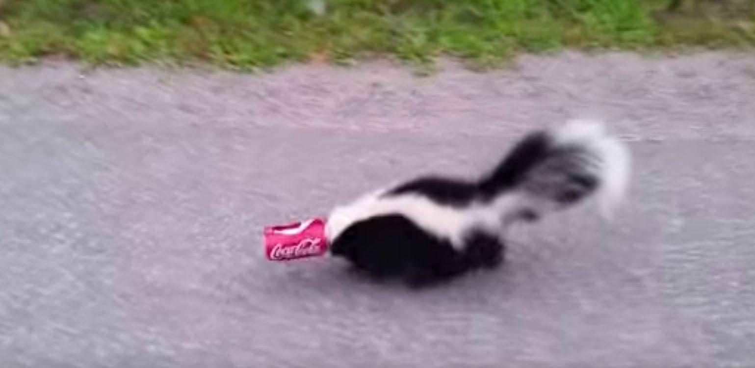 Good Samaritan Frees Adorable Skunk From Coke Can