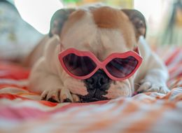 Struggling To Sleep? Wear Your Shades Before Bed, Researcher Suggests
