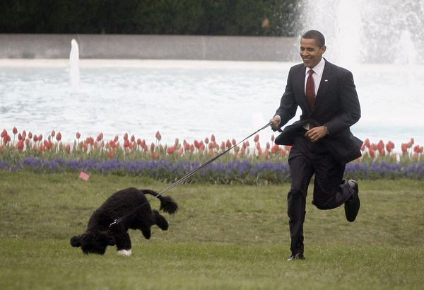 Let's face it: no suit on earth can compete with the cuteness of Bo.