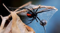 Man Bitten On Penis By Spider For The Second Time This