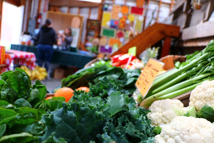 Fresh, organic vegetables for sale at Wild Hare Farm in Puyallup, Washington