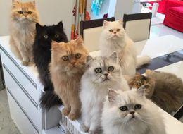 Woman Is The Ultimate Cat Mum With Her 12-Cat Posse