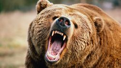 Man Gets Attacked Twice By Grizzly Bear, Films Video Of Himself Covered In