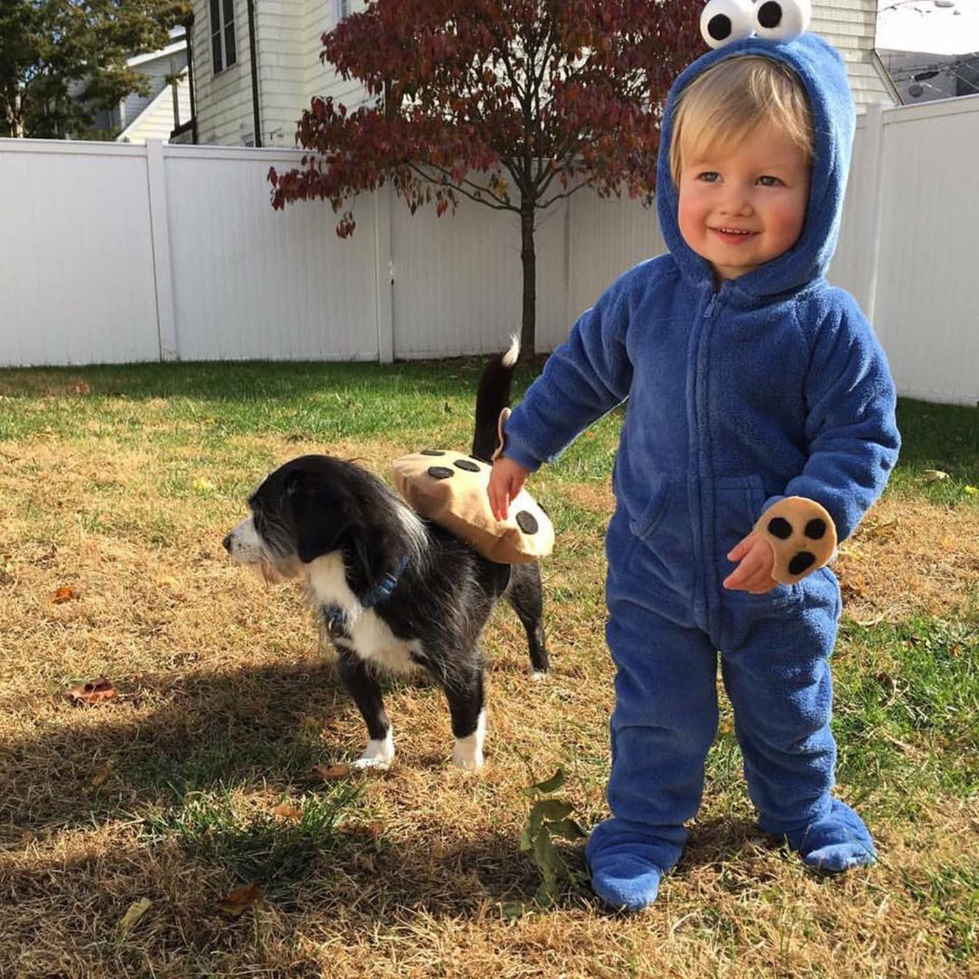 1 Cookie Monster And His Cookie  sc 1 st  HuffPost & 30 Perfect Halloween Costumes For Kid And Dog BFFs | HuffPost