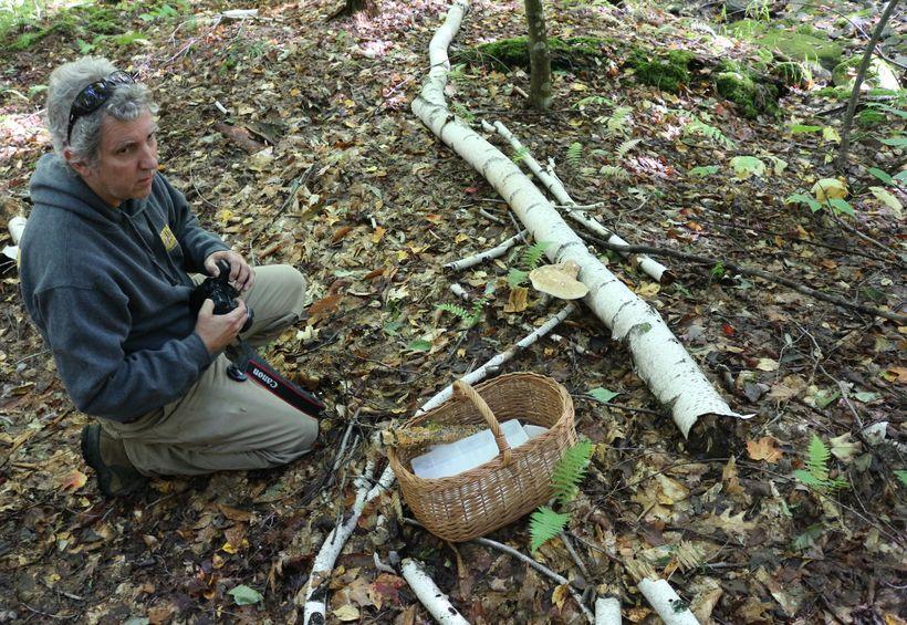 Documenting fungi