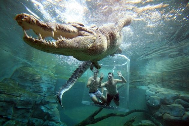 This Crocodile 'Cage Of Death' Is Not For The Faint Of