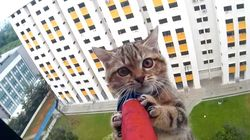 Try Not To Hold Your Breath As This Kitten Is Rescued From A 12th-Story