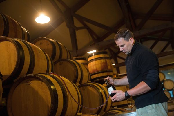 Friedrich Wilhelm Becker syphons pinot noir from a barrel during the Oct. 4 tasting.