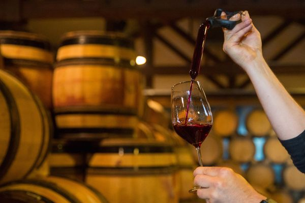Friedrich Wilhelm Becker, co-owner of the Weingut Friedrich Becker Estate, fills a glass with pinot noir, also known as