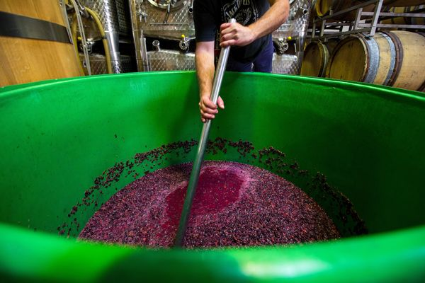 A vintner stirs crushed grapes in a fermentation tank during pinot noir production.
