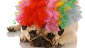 dog dressed up as a clown
