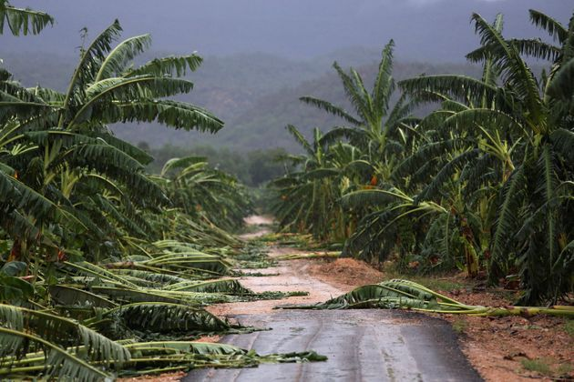 Winds leveled trees on Cuba's