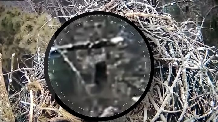 Is it Bigfoot? A camera perched above an eagle nest in Michigan appears to have captured a dark, ape-like creature walking ar