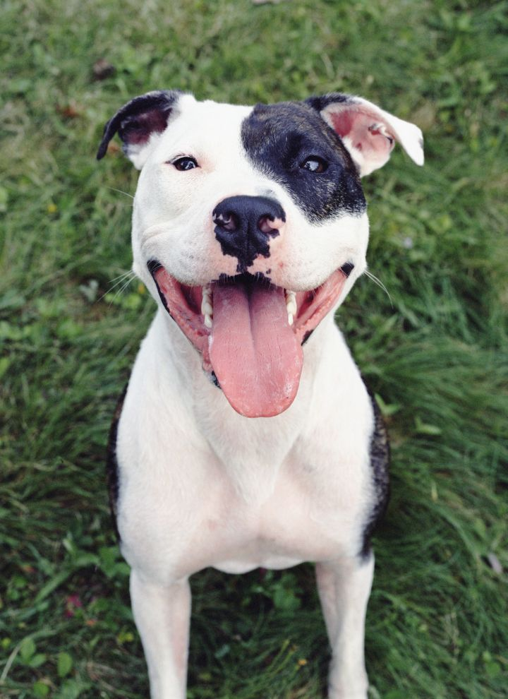 The legislation, which passed in September, would mean pit bull-type dogs in animal shelters would all have to be euthanized.