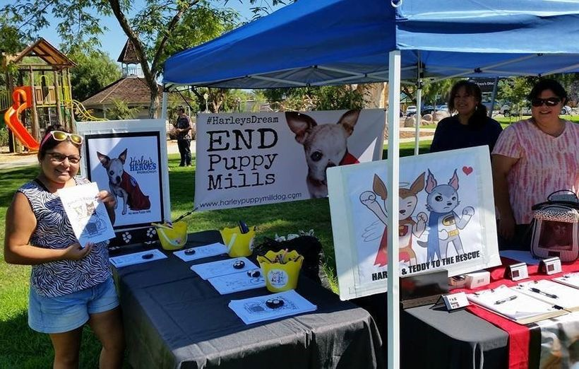Sharing #HarleysDream during Woofstock in Escondido