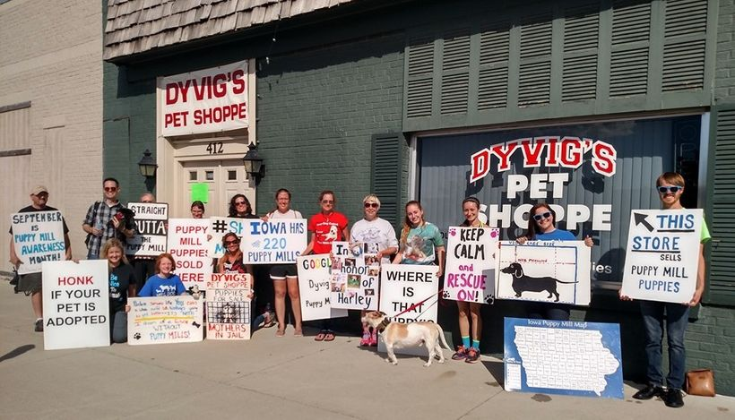 Protesting in front of Dyvig's Pet Shoppe is nothing new for these passionate advocates.