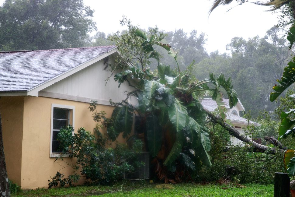 A downed tree from high winds rests against the side of a home in residential community after Hurricane Matthew passes throug