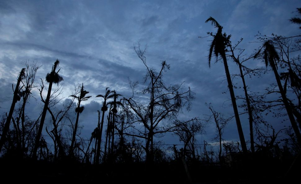 Trees are seen after being hit by Hurricane Matthew on the outskirts of Les Cayes, Haiti, October 6, 2016.