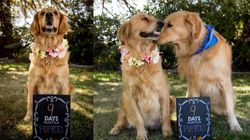 Pregnant Dog Totally Slays Maternity Photo