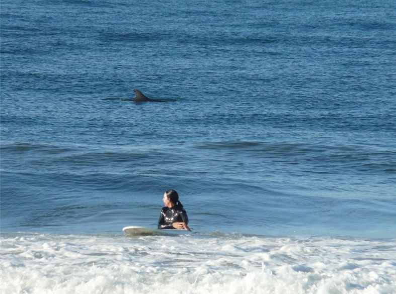 The Author Surfing in Santa Monica with Dolphins Nearby