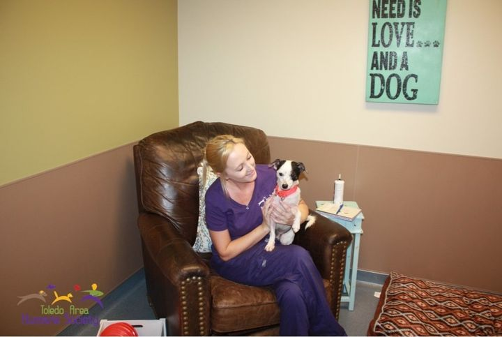A pup enjoying its time in a real-life room at the Toledo Area Humane Society.