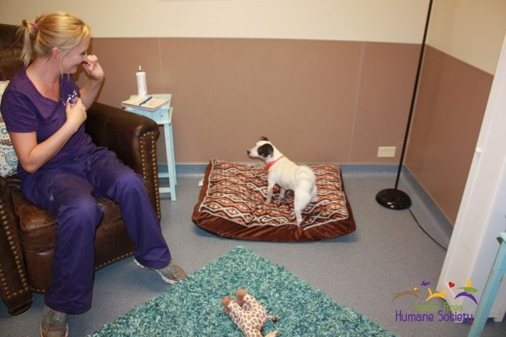 A pup stands on a bedin a real-life room at the Toledo Area Humane Society.