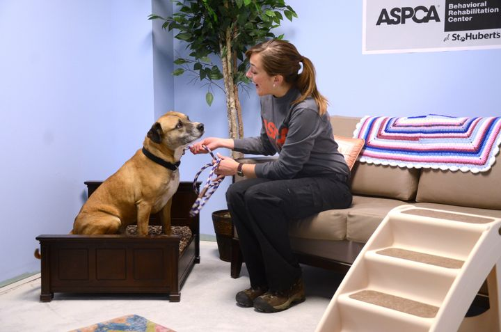 A pooch at a real-life room in the ASPCA's rehab center.