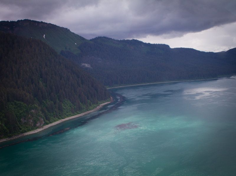 The outer coast of Glacier Bay National Park where yellow cedar trees still thrive.