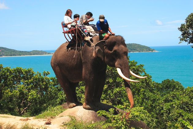 TripAdvisor announced that elephant rides will be one of the activities no longer available through its