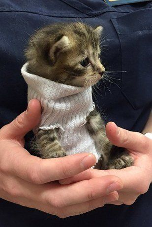 The kitten being held by an animal hospital staffer.