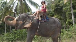 TripAdvisor Will Stop Selling Tickets To Cruel Wild Animal