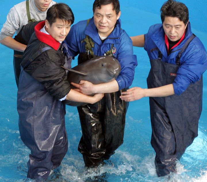 Staff at Wuhan Baiji Dolphin Aquarium in Central China's Hubei province hold an eight-month-old finless porpoise in 2006