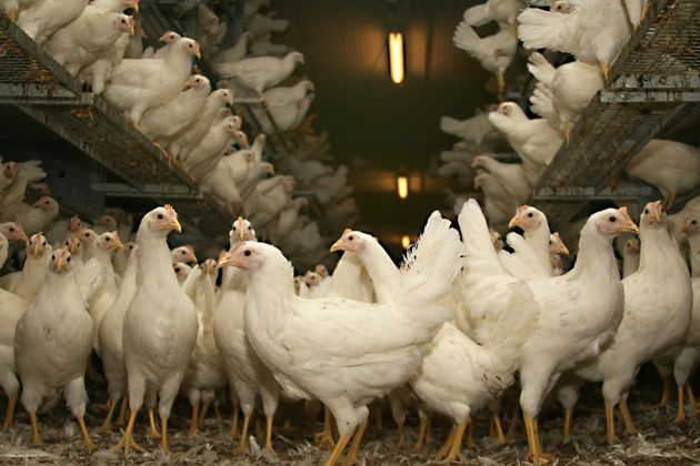 The Real Difference Between Pasture-Raised, Free-Range And Cage-Free