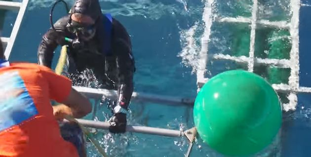 The diver later emerges from the cage unhurt as he receives a round of