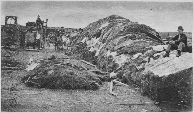 Buffalo Hides, 1878