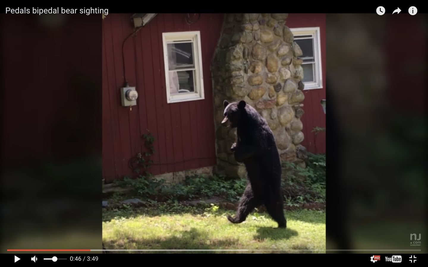 Pedals the bear was seen strolling around a New Jersey neighborhood back in June