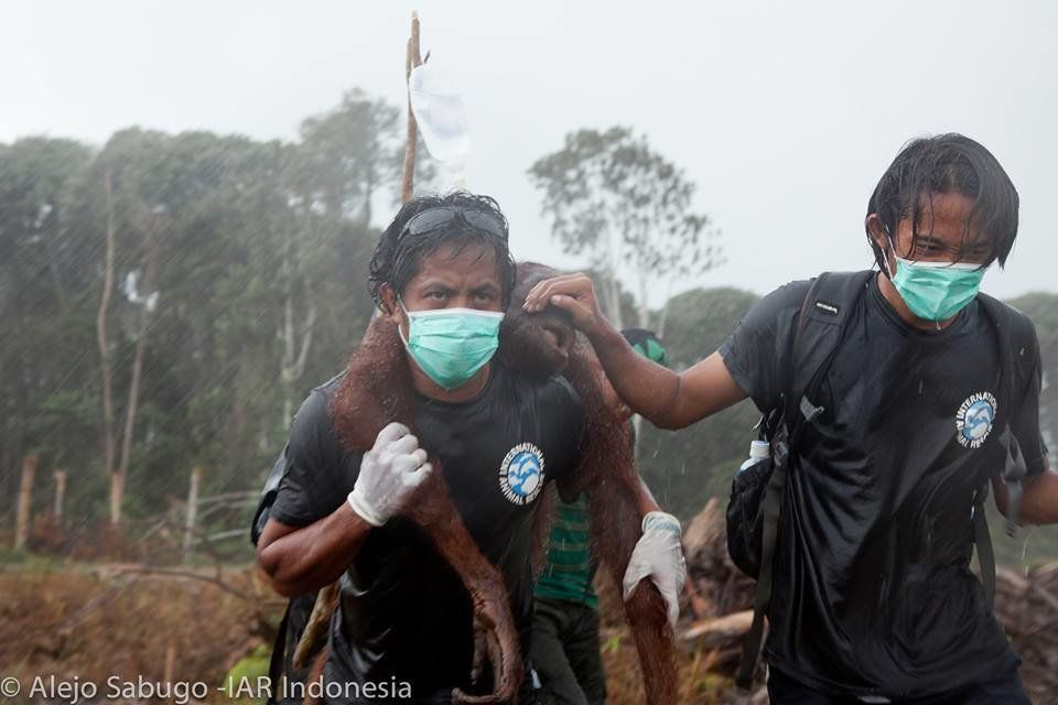 "Animal rescuers Syifa Sidik and Argitoe Ranting were called ""truly real life heroes""..."