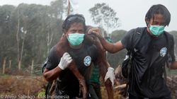 Viral Orangutan Photo Serves As Poignant Reminder Of Apes' Continued