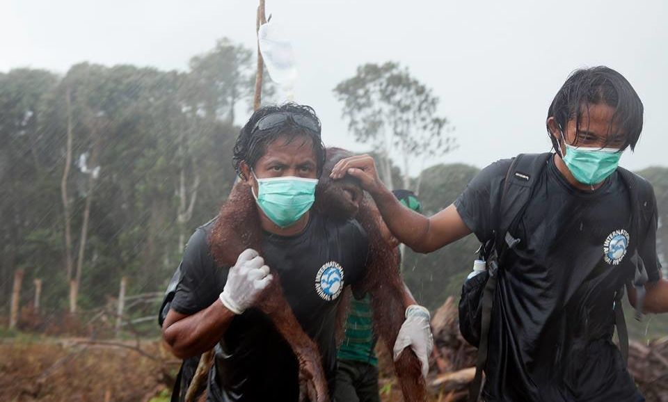 "Animal rescuersSyifa Sidik and Argitoe Ranting were called""truly real life heroes""..."