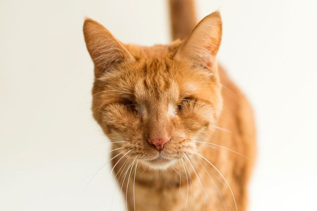 目を失った猫たちも、愛される価値がある。写真家が伝えたいこと(画像)