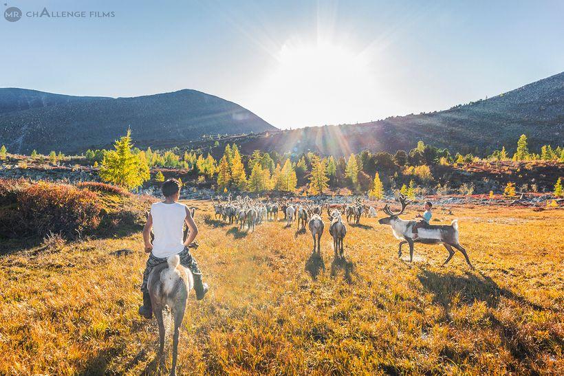 Tsaatan, the Reindeer Herders