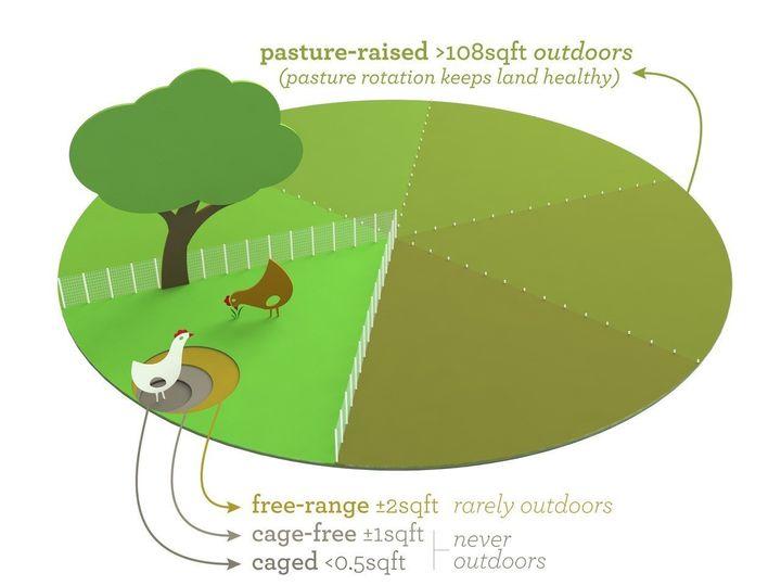 free range vs pasture raised eggs