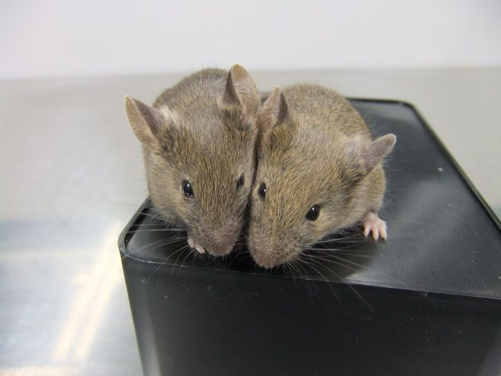 Mice born from egg cells that had been derived from skin cells.