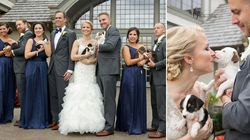 These Pit Bull Rescue Pups Are 100 Times Better Than Any Wedding