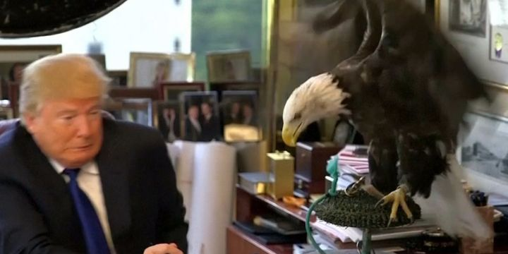 Eagle knows best...