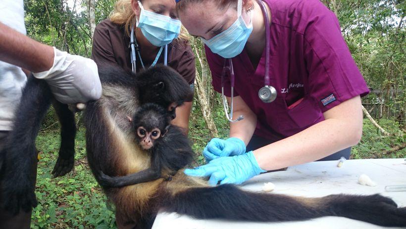 Guatemalan veterinary internship