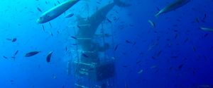 SHARK DIVE CAGE