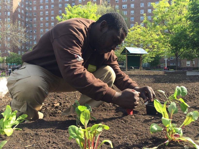 An AmeriCorps Member with Green City Force tends to a farm on New York City Housing Authority Property.