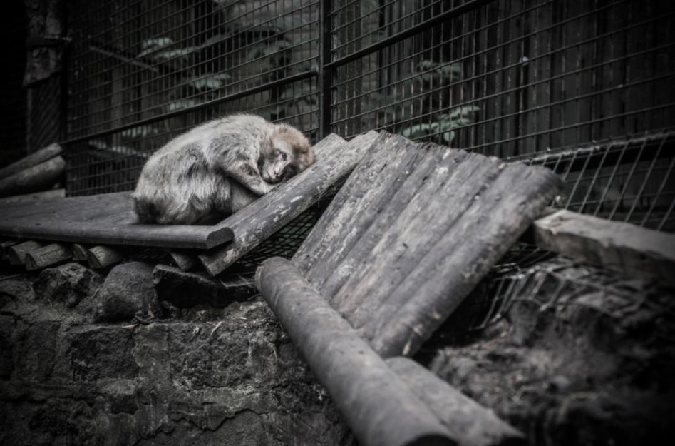 Haunting Photos Capture A Depressing Life For Europe's Zoo